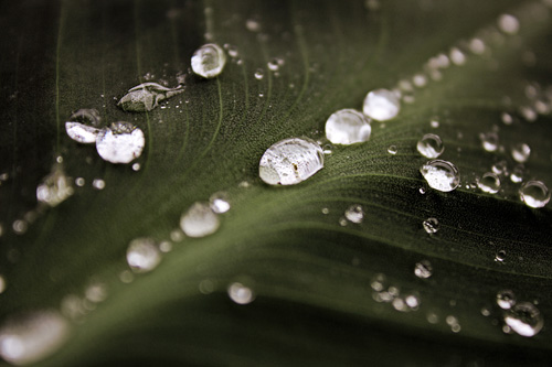 Waterdrops on a leaf.